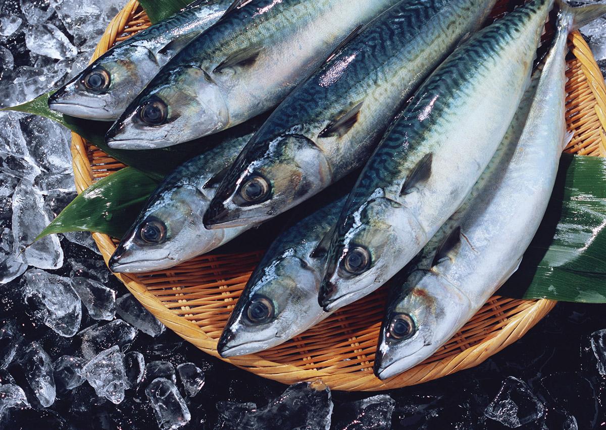 美味しい鯖をヘルシーに!簡単にできる低カロリーの鯖レシピ5選のサムネイル画像