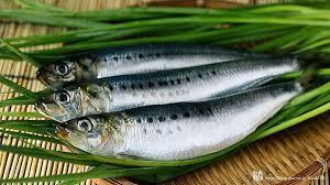 知っ得情報!いわしの意外なカロリーとぎゅっとつまった栄養効果!のサムネイル画像