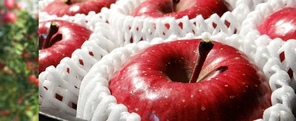 りんごが赤くなればりんごの効能で医者要らず!りんごの健康効能!のサムネイル画像