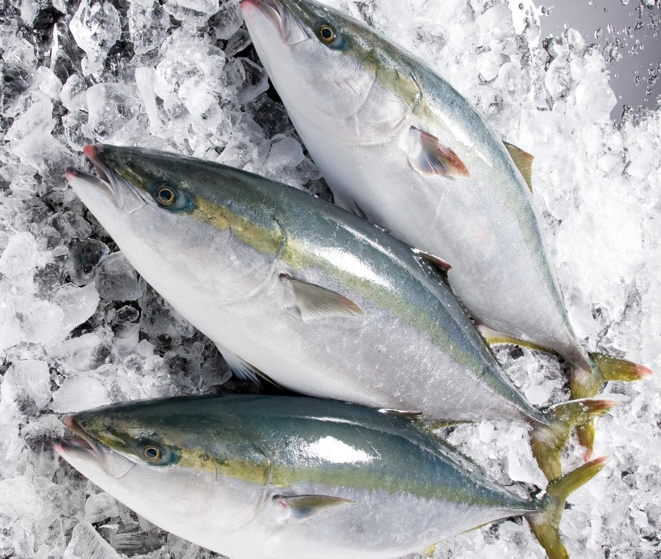 出世魚の最高峰!最高の食味のぶり!その知られざる栄養と健康効果のサムネイル画像
