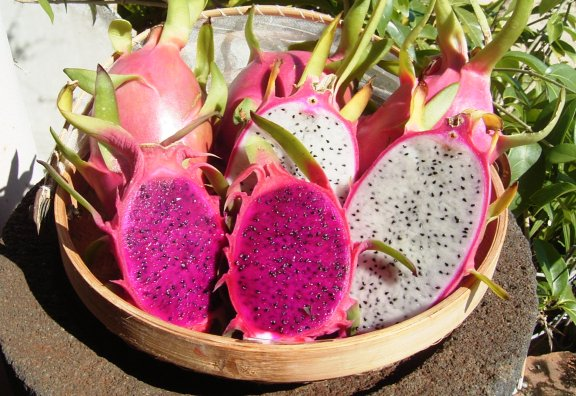 南国の香りが漂ってきます♪知られざるドラゴンフルーツの栄養効果!のサムネイル画像