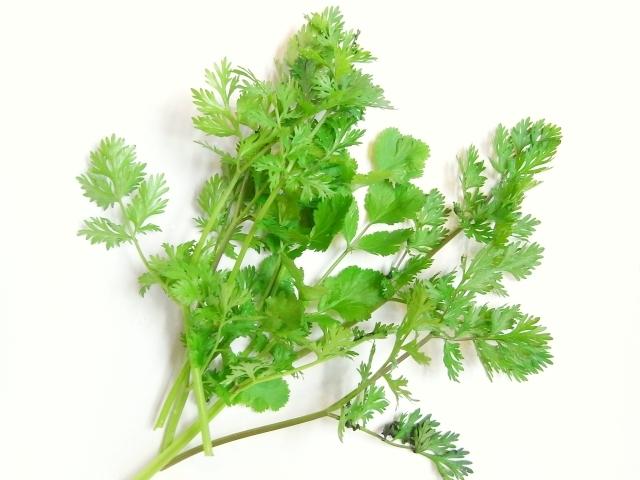 クセのある独特な香り♪パクチーの知られざる栄養とその栄養効果とはのサムネイル画像