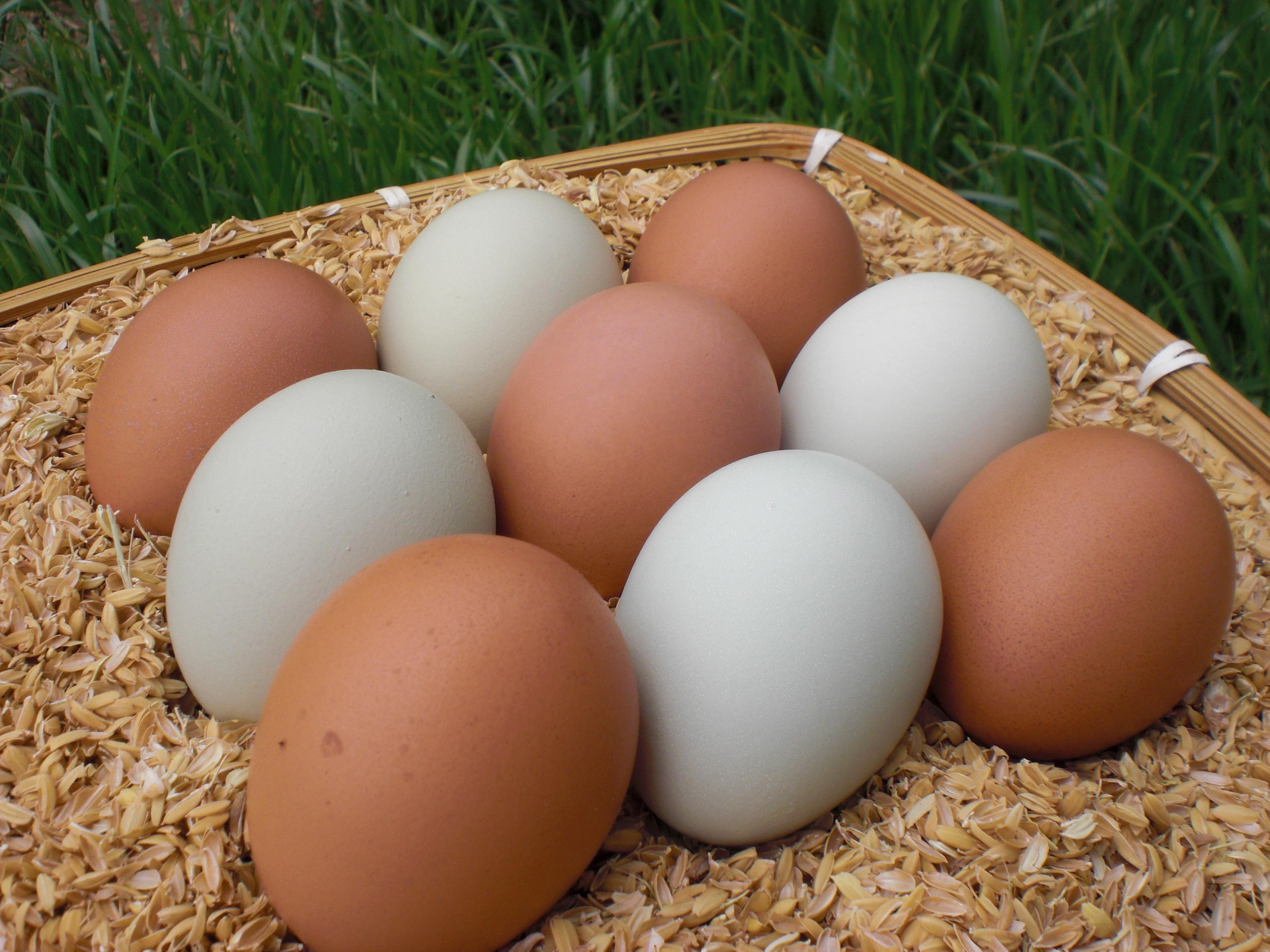 完全栄養食とも言われている卵は食べ方によって太る事もある?のサムネイル画像