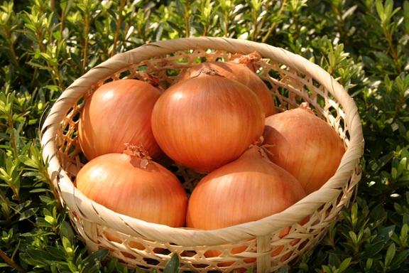 玉ねぎの栄養素には、何が含まれているの?気になる健康効果についてのサムネイル画像