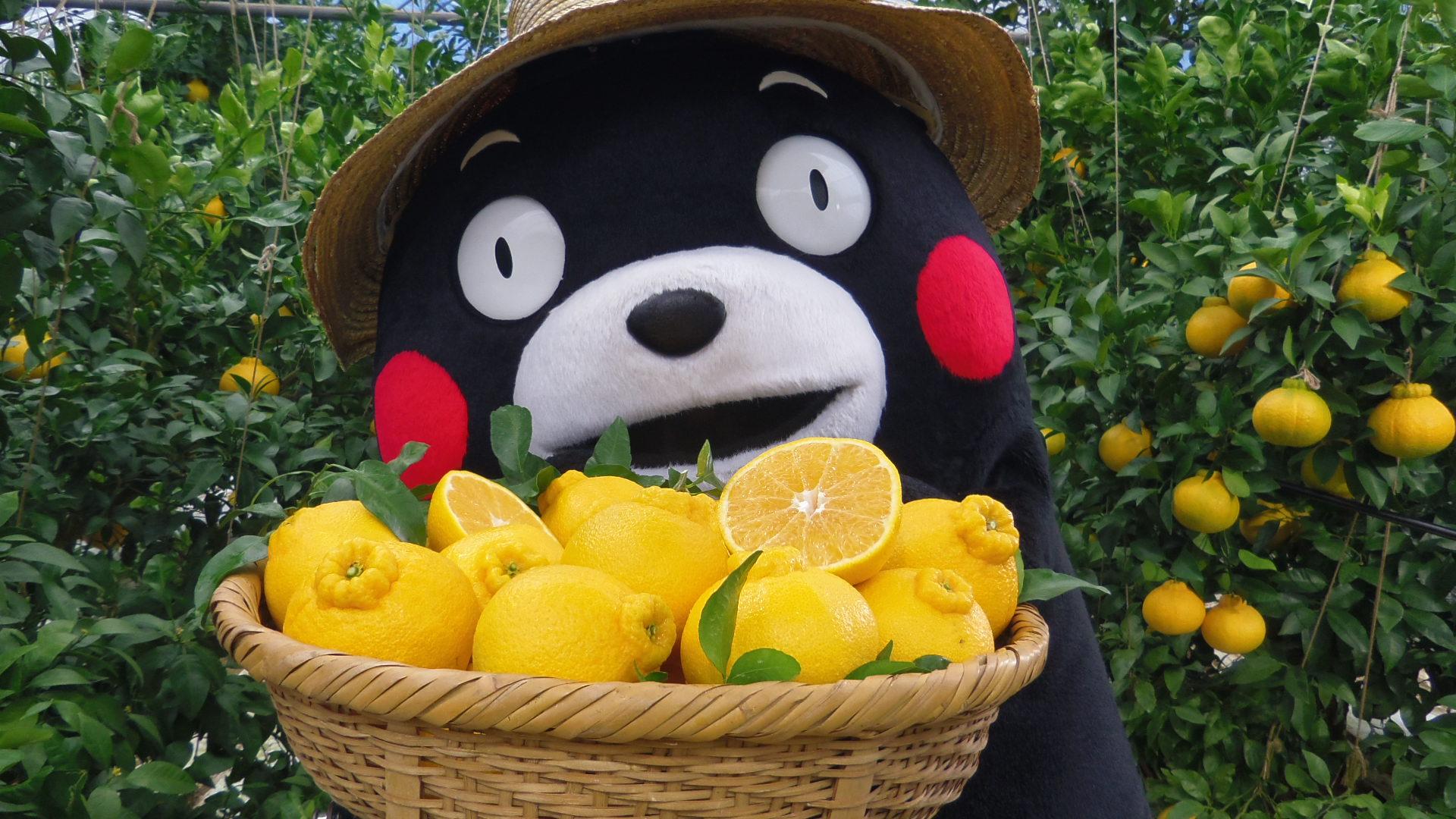 デコポンはカロリーは?実はダイエットに最適なフルーツだった?!のサムネイル画像