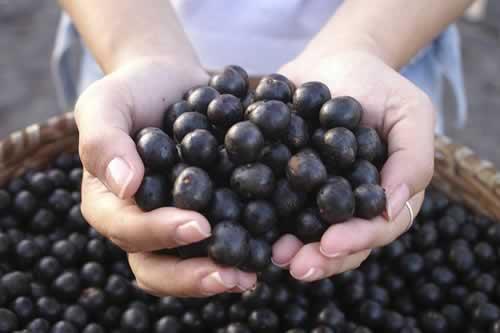 女性に人気のフルーツ「アサイー」。 詳しい栄養&効果をご紹介!のサムネイル画像