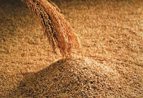今すぐにでも導入すべし!?驚きの玄米のダイエット・健康効果!のサムネイル画像