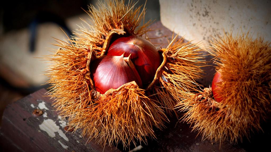 秋の味覚には欠かせない『栗』 気になる栗のカロリーをご紹介!のサムネイル画像