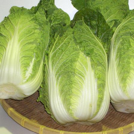 シャキシャキ白菜の実力!その万能ぶりと気になるカロリーを大調査!のサムネイル画像