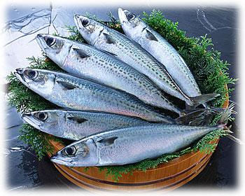 冬が旬!鯖の実力と驚きの栄養効果!知られざるカロリーも徹底調査!のサムネイル画像