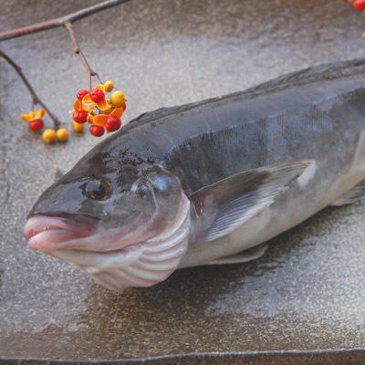 北の魚で干物の王様!ほっけのカロリーと栄養効果を徹底調査!のサムネイル画像