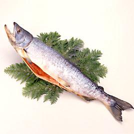 神秘の生態を持つ鮭!その栄養効果とカロリーを調べてみよう!のサムネイル画像