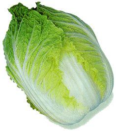 白菜はカロリー低くダイエットの味方!白菜たちの栄養カロリーなどの画像